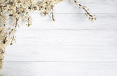 fruit tree flowers on the white wooden background.