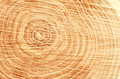 Close-up of wooden cut texture with tree rings