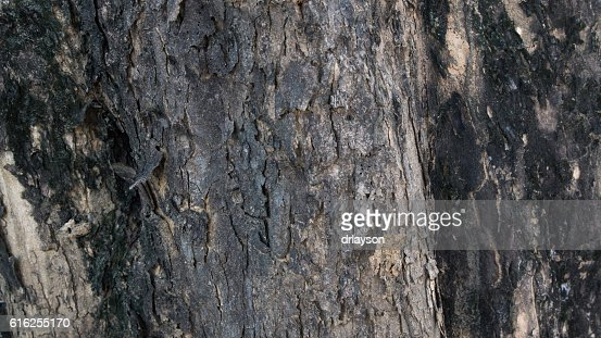 wood texture (1) : Foto de stock