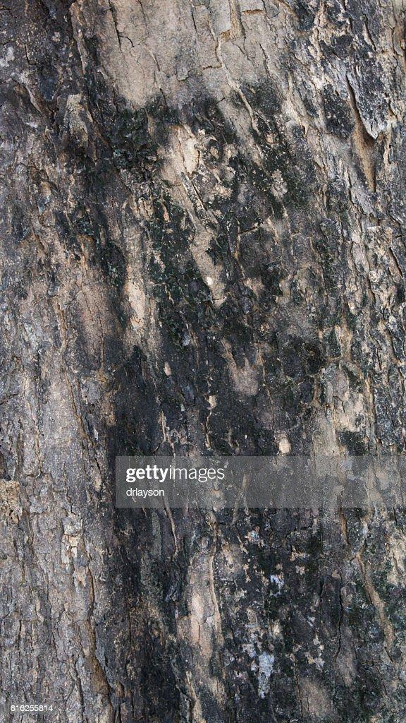 wood texture (2) : Foto de stock