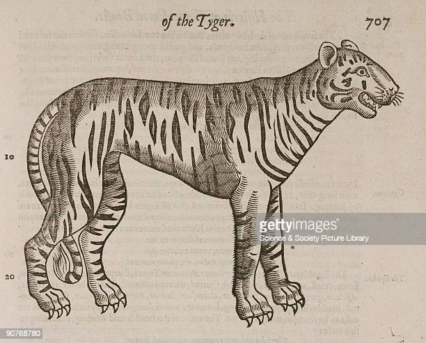 Woodcut from �The Historie of fourefooted beastes� by Edward Topsell published in London in 1607 Topsell's main source was �Historiae animalium� by...