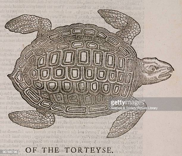 Woodcut from �The historie of serpents� by Edward Topsell published in London in 1687 Topsell's main source was �Historiae animalium� by Conrad...