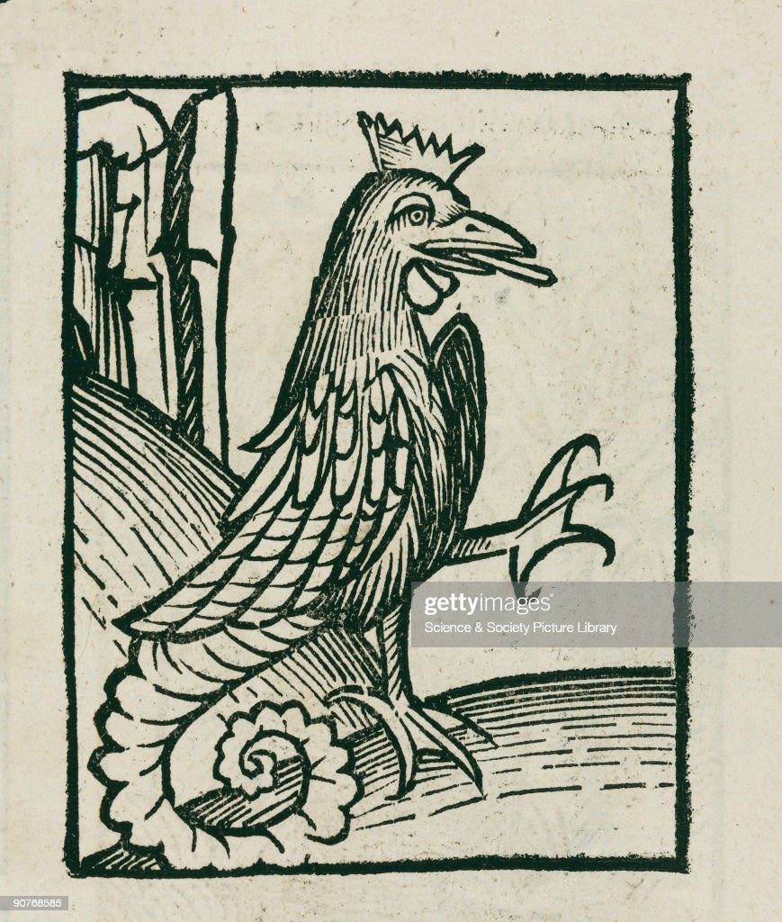 Woodcut of the creature which had the wings of a bird the tail of a dragon or serpent and the head of a cock The deadliest of the mythical creatures...