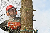 Woodcutter in action in denmark