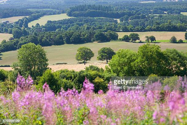 Wooded countryside near Guildford, Surrey, England