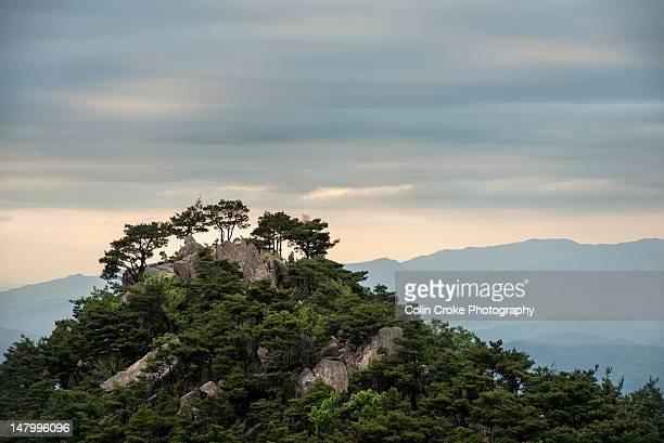 Wooded peak