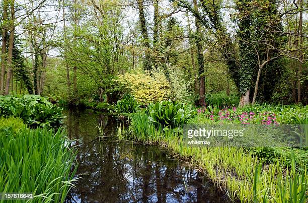 Wooded wetlands in Norfolk, England