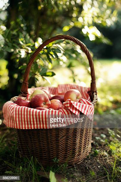 Wooden basket full of red apples