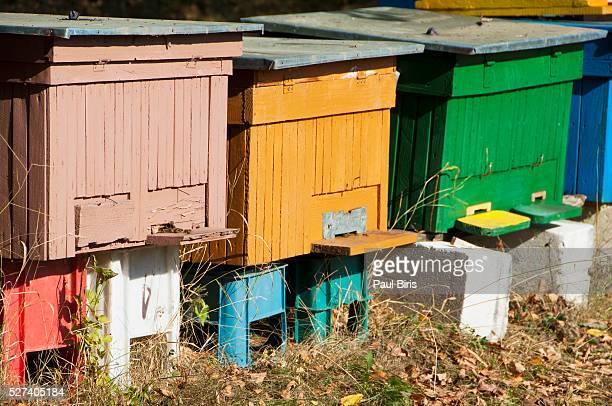 Wooden beehive, Transylvania, Romania