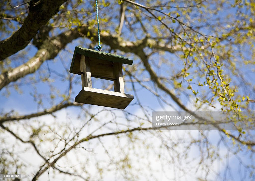 Wooden bird perch hanging from a tree : Stock Photo