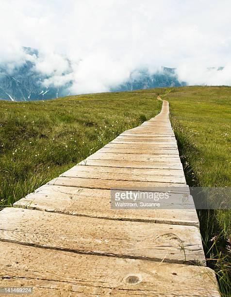 Wooden boardwalk on meadow