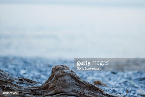 wooden branch in the beach : Stock Photo