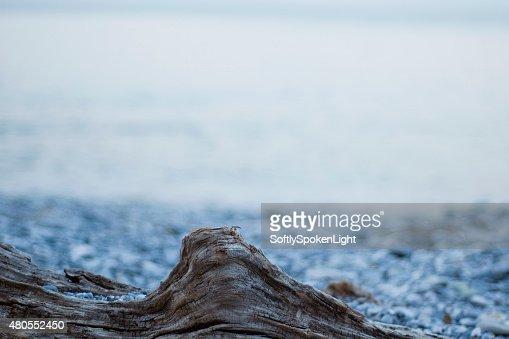 Ramo de madeira na praia : Foto de stock