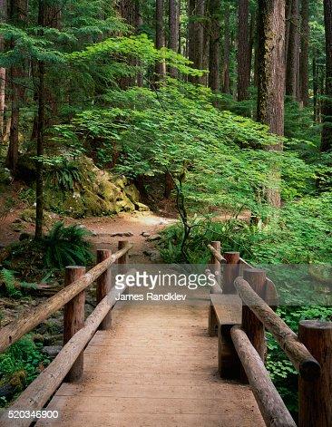 Wooden Bridge Along Sol Duc Falls Trail