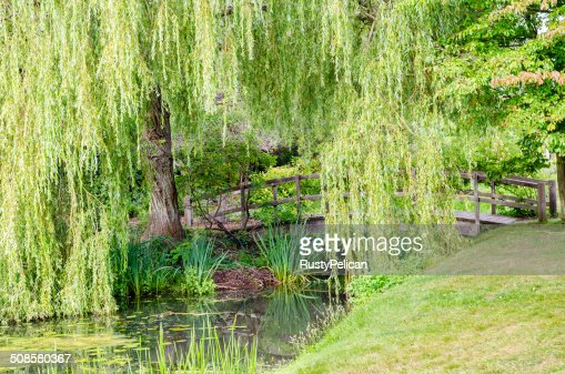 Wooden Bridge Crossing Tranquil Stream : Bildbanksbilder