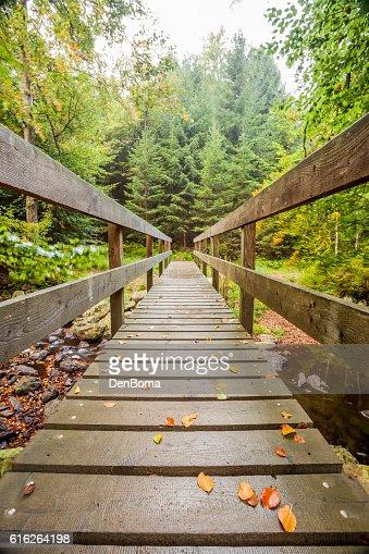 wooden bridge in nature : Stock Photo