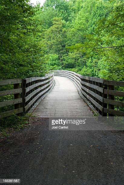 Ponte di legno attraverso la foresta verde sulla Vite del Canada Trail