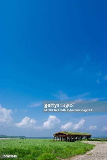 Wooden building in field, copy space