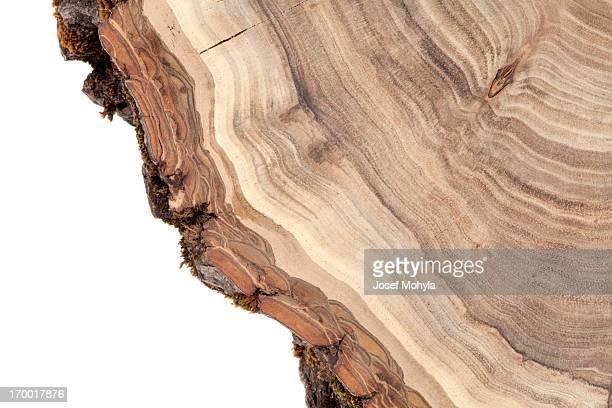 Fond de bois de section