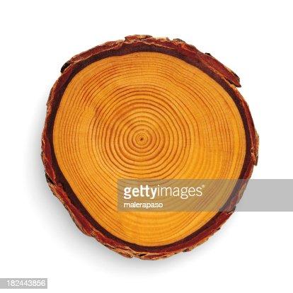 Sección transversal de madera