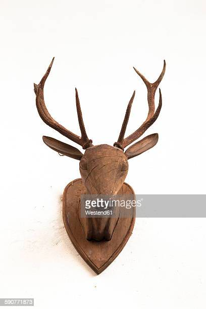 Wooden deer head on white wall