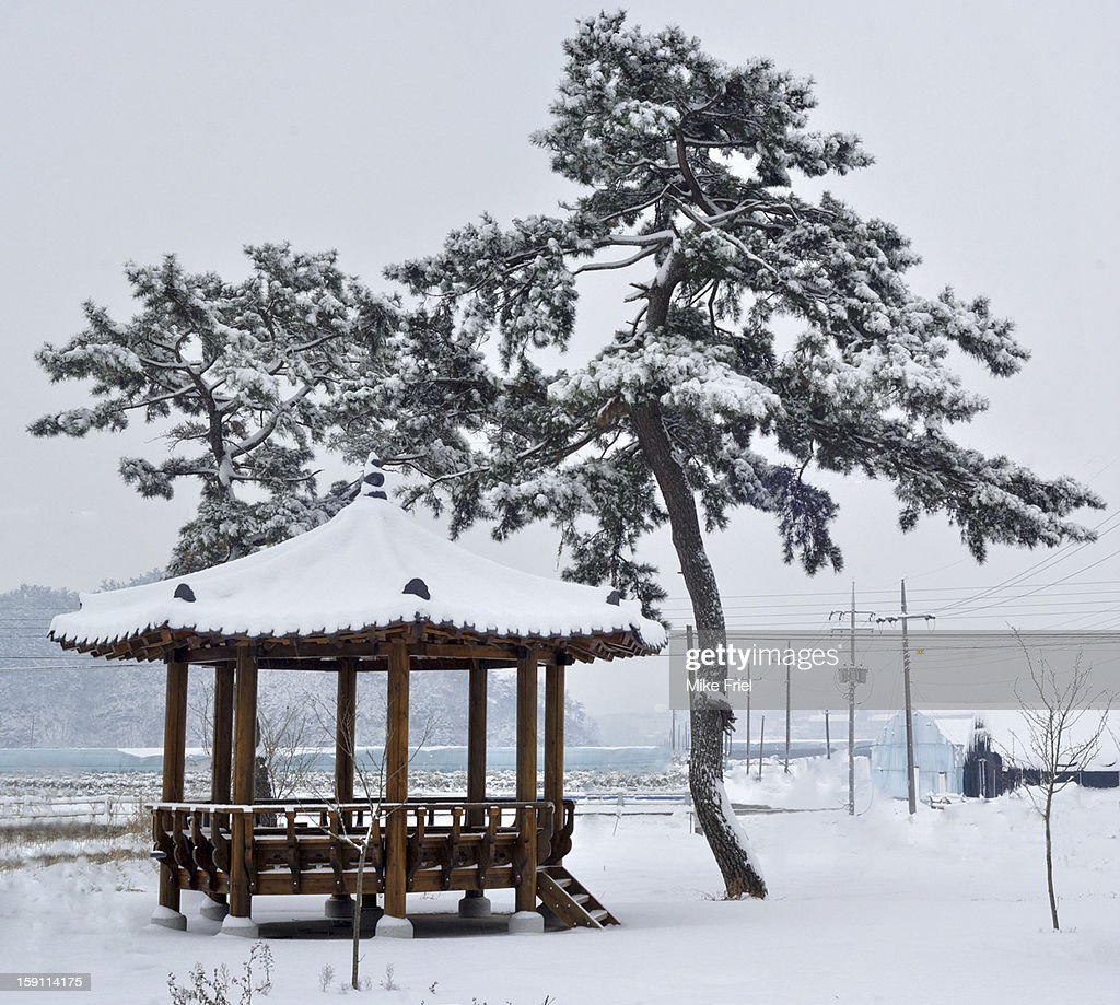 A wooden gazebo and two pine trees in the snow : Stock Photo