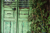 Wooden green door with a lock. Around is a lot of greenery. Cloudy weather, early autumn