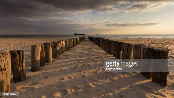 Wooden groynes on the beach, Vlissingen, Zeeland, Holland