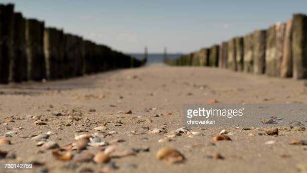 Wooden groynes on the beach, Zoutelande, Zeeland, Holland