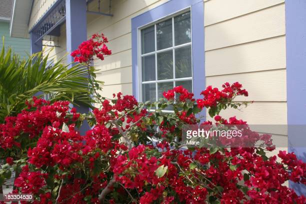 Casa in legno con brillante Buganville