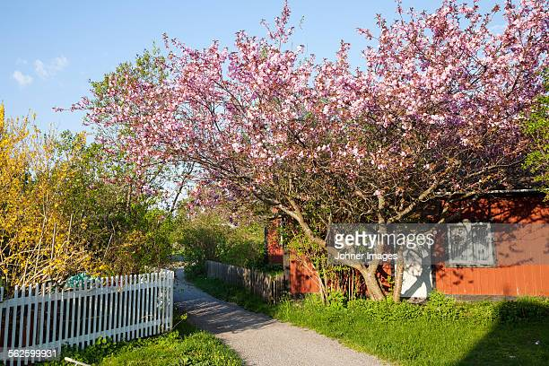Wooden house with garden at spring