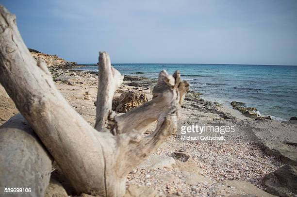 Wooden jetsam at a beach on May 12 2016 in Formentera Spain