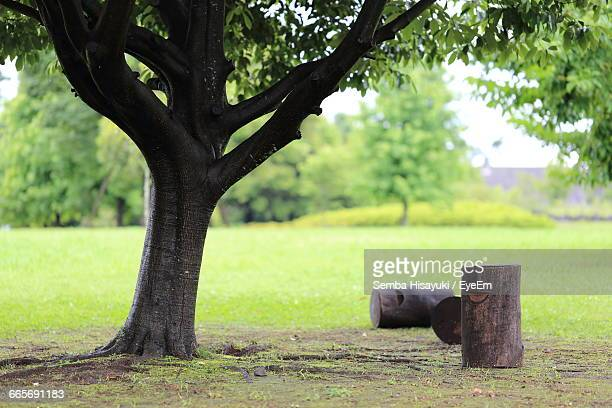 Wooden Logs By Tree In Park