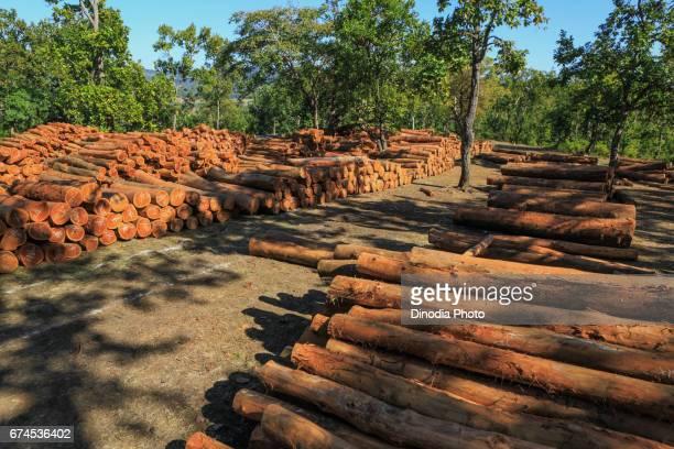 Wooden logs mumbai maharashtra india, asia