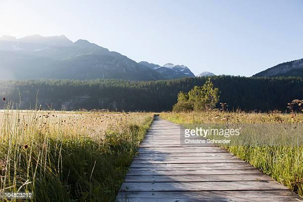 Wooden path through green grass