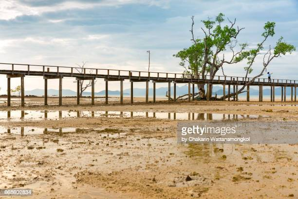 Wooden Pier with Mangrove Trees on the Sand