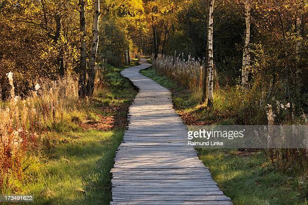 Wooden Planks Path