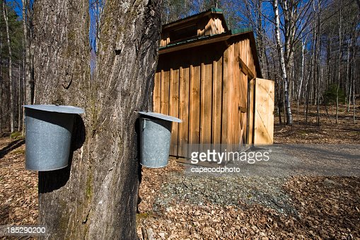 Wooden shed in the woods next to large tree with metal bins