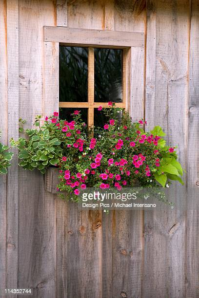 Wooden Shed With A Flower Box Under The Window