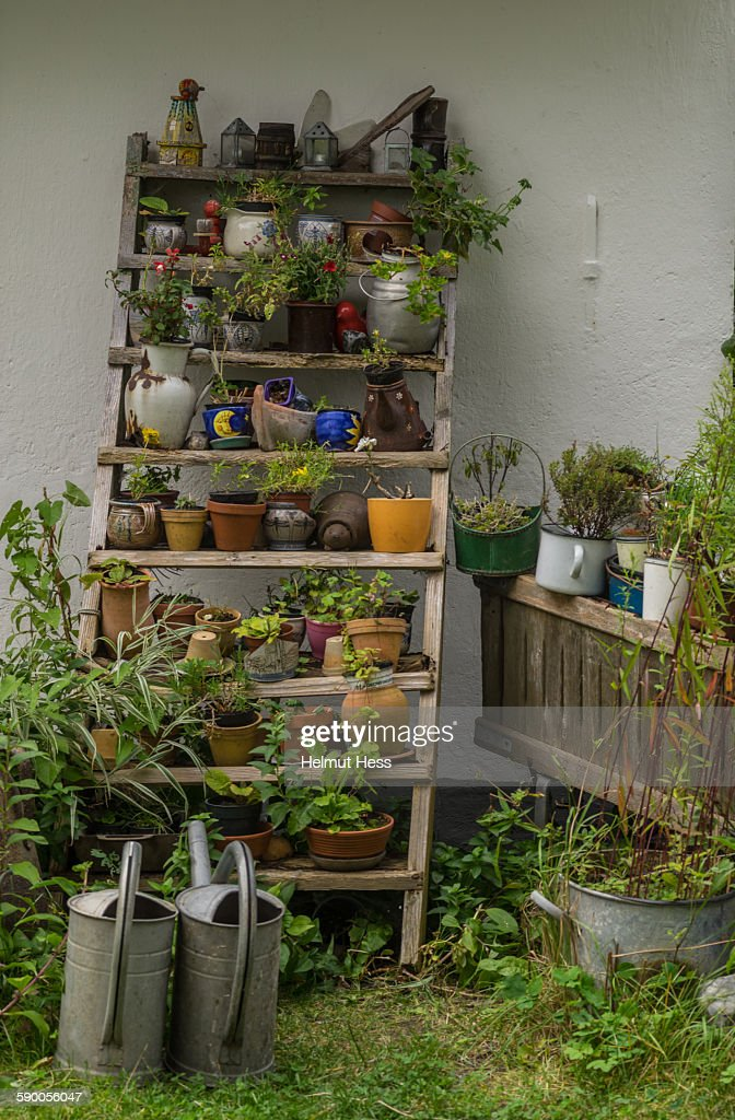 Wooden shelf with flowerpots