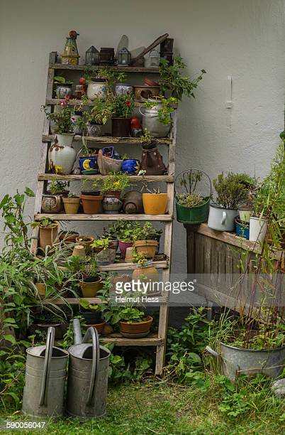 Wooden shelf with flowerpots