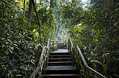 Wooden staircase in jungle scenery