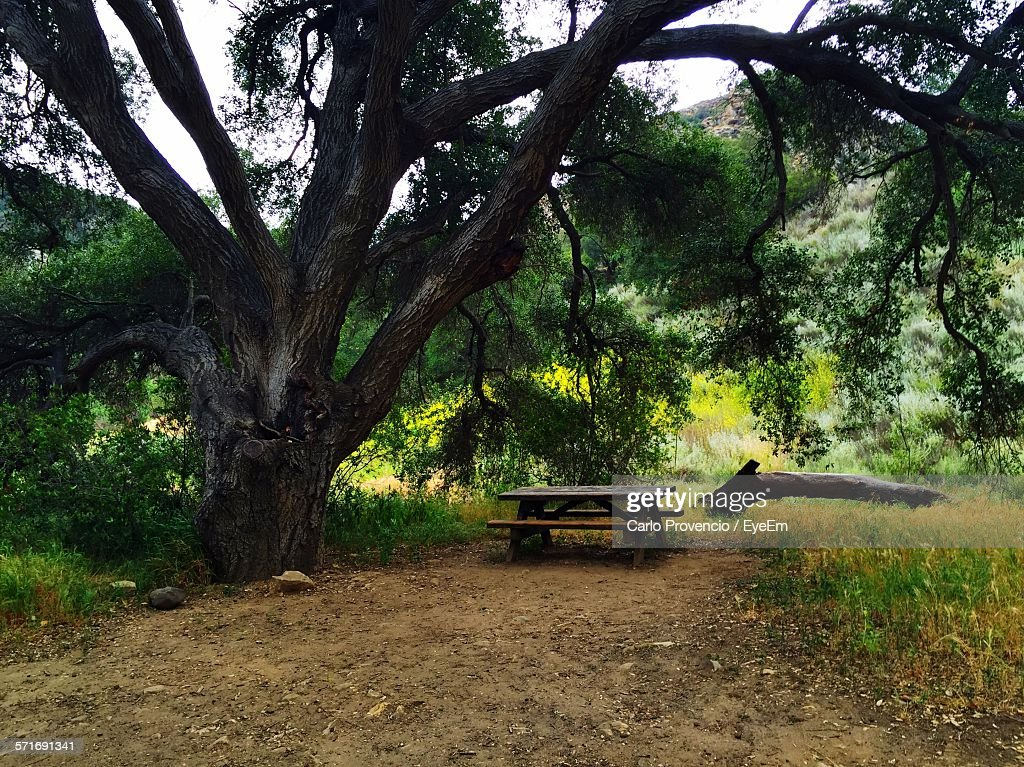 Wooden Table Under Large Tree