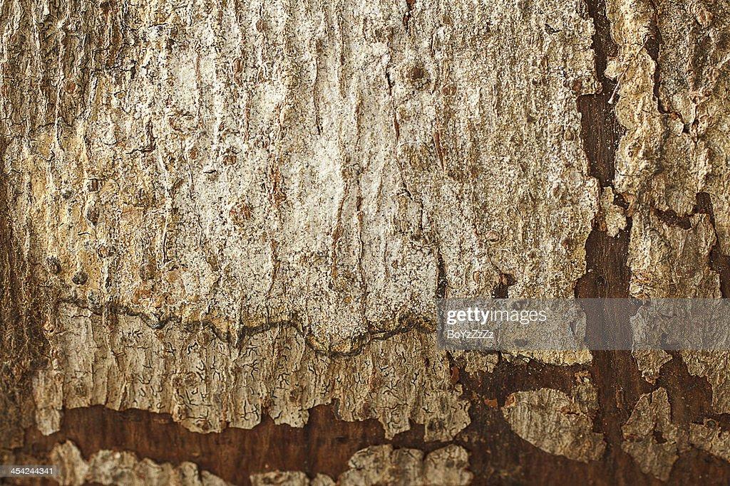 Wooden Texture : Stock Photo