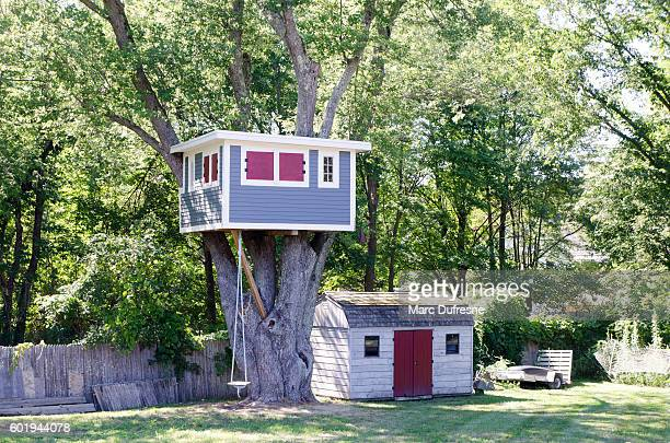 Wooden Tree house built in a tree