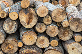 Tree logs, Wooden tree trunks or stumps in the nature cut for the winter or firewood log
