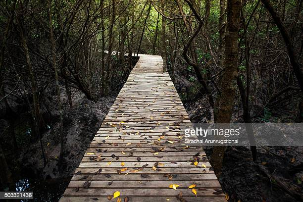 Wooden walkway in a mangrove forest