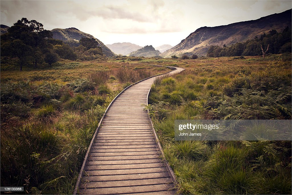 Wooden walkway : Stock Photo