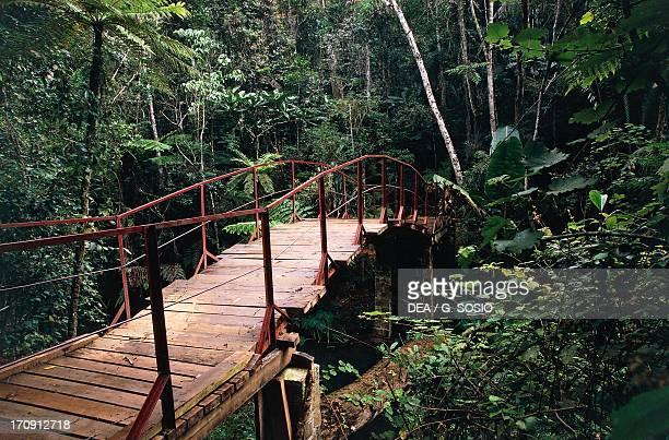 Wooden walkway Special Reserve of Indri of Analamazaotra AndasibeMantadia National Park Madagascar