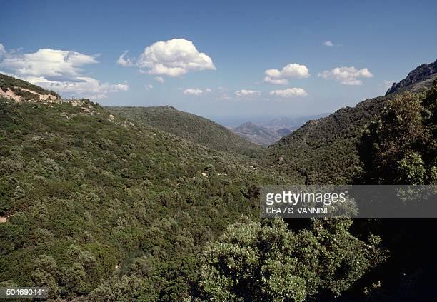 Woodland Barbagia di Seulo Sardinia Italy